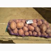 Картофель по выгодной цене оптом