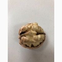 Куплю ядро грецкого ореха 1/4 Четверть урожая 2020 г От 1 ТОННЫ
