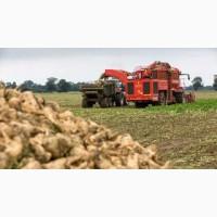 Уборка сахарной свеклы буряка комбайнами по Украине комбайны Холлмер Ропа