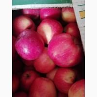 Яблука тверді і сочні