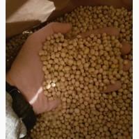 Семена сои ABEE (под раундап) канадский трансгенный сорт (элита)