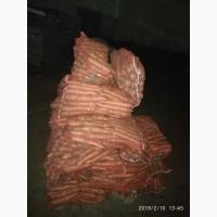 Продам морковь сорта Морели, большие объемы. Опт и Экспорт