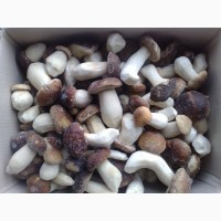 Продам замороженный гриб ПОДБЕРЁЗОВИК целый до 7 см (вся Украина), Львовская обл
