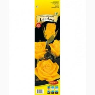 Продаж саджаців троянд