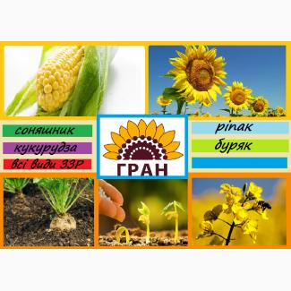 Науково-виробнича фірма ГРАН пропонує посівний матеріал соняшнику ЖАЛОН ГРАНД