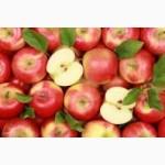 Есть покупатели яблок для переработки, для рынков и на экспорт
