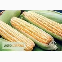 Семена кукурузы Амарок (ВНИС)