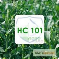 Гібрид кукурудзи НС 101 посівний матеріал Сербська селекція