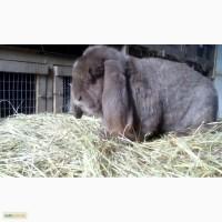 Продам кроликов Харьков