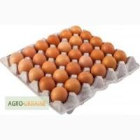 Реализуем яйцо (коричневое)