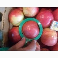 Яблука Продам 2017 р