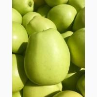 Продам яблука оптом із власного саду.Урожай 2017р