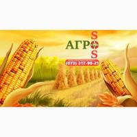 Семена кукурузы, украинская селекция: Мел, Любава, Солонянский, Белозерский