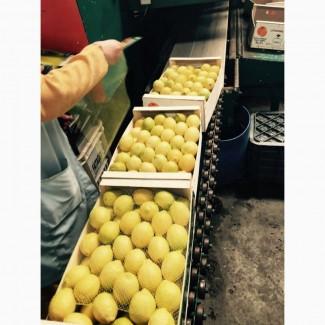 Лимоны Марокканские