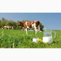 Куплю молоко коров#039;яче оптом. ДОРОГО