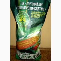В наявності насіння кукурудзи, різне ФАО