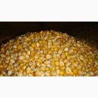 Постійно купуємо пшеницю фуражну. На елеваторах і господарствах по Чернівецькій області