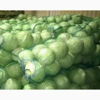 Продам оптом капусту Агрессор, отличный товарный вид, без болезней и вредителей