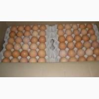 Продам яйца с0 с1 с2