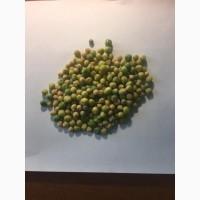 Озимий Горох НС Мороз Оригінальне насіння від ОФІЦІЙНОГО Виробника