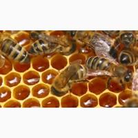 Продам мед оптом 2018 года