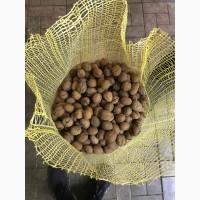 Продам ядро грецкого ореха оптом от 1т