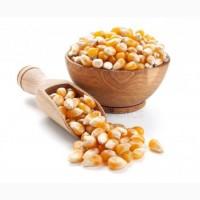 Закуповуємо базову кукурудзу у с/х виробників
