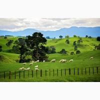 Продам травосмесь для пастбищ и сенокосов