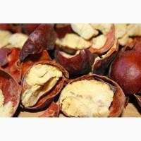 Продам сушеные плоды каштана