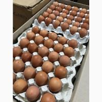 Предприятие реализует яйцо разной категории на постоянной основе