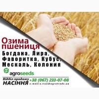 Богдана, Фаворитка, Годувальница, Мескаль (LG), Колония (LG), Кубус (KWS) от Agroseeds