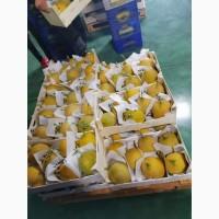 Лимоны (Турция)