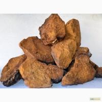 Продам гриб ЧАГА, 35грн/100гр