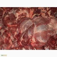 Продам телятіну, говядіну, мякоть(лопатку, ошеяок, качалки, брюшина, ребро)