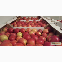 Гофроящик для яблок, ящик для фруктов