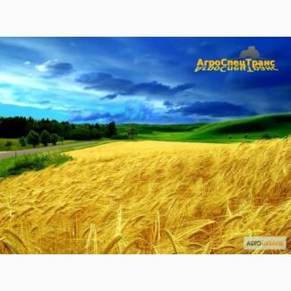 Аренда сельскохозяйственной техники на уборку зерновых культур