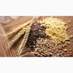 Зерновые культуры оптом (ЗАКУПАЕМ)