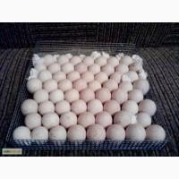 Яйцо инкубационное БИГ-6
