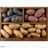 Покупаем картофель оптом в большом количестве. Самовывоз. Звоните