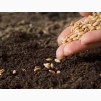 Куплю пшеницю 1, 2, 3 класу 2017 року