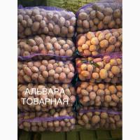 В продаже картофель высокого качества! Объем ограничен