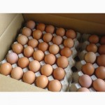 Куриные столовые яйца