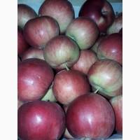 Куплю яблоко 7+ от 19 тонн