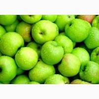 Продажа крупным оптом яблок, Черновцы