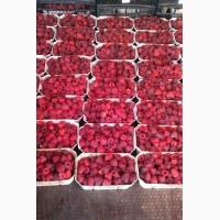Продам саженцы (кусты) малины