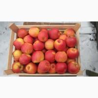 Продам яблука різних сортів гарної якості