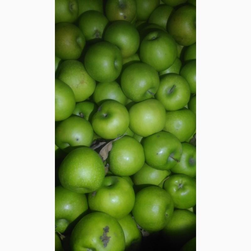 Яблука продам, Кировоградская обл.