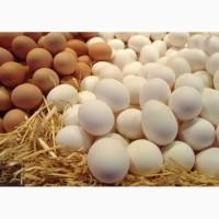 Продам яйца оптом С0 С1 С2