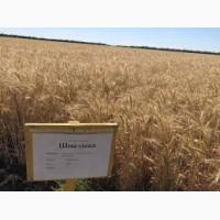 Продам Шпаловка(пшеница)