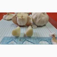 Продам чеснок от поставщика с Узбекистана от 20 тонн. 100 % предоплата